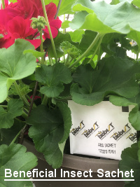 Beneficial insect sachet